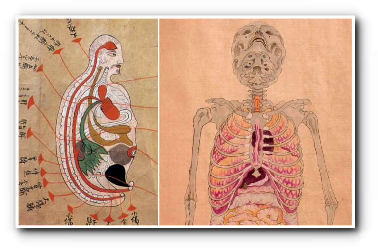 История медицины — анатомия в Японии 1