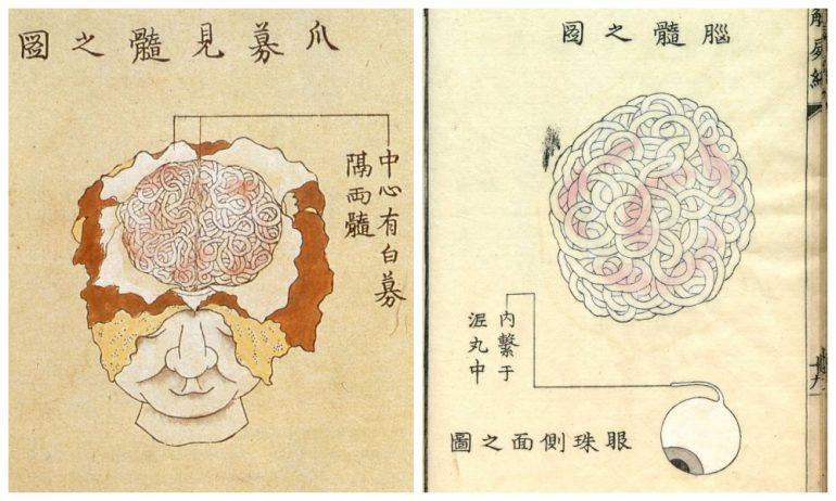 История медицины — анатомия в Японии 5