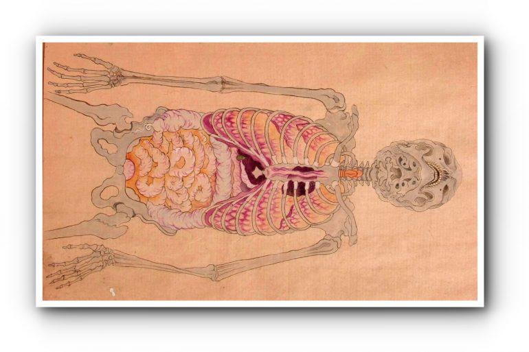 История медицины — анатомия в Японии 10