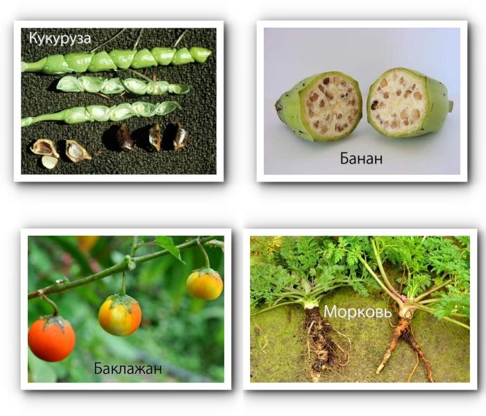 Вся правда о ГМО 2