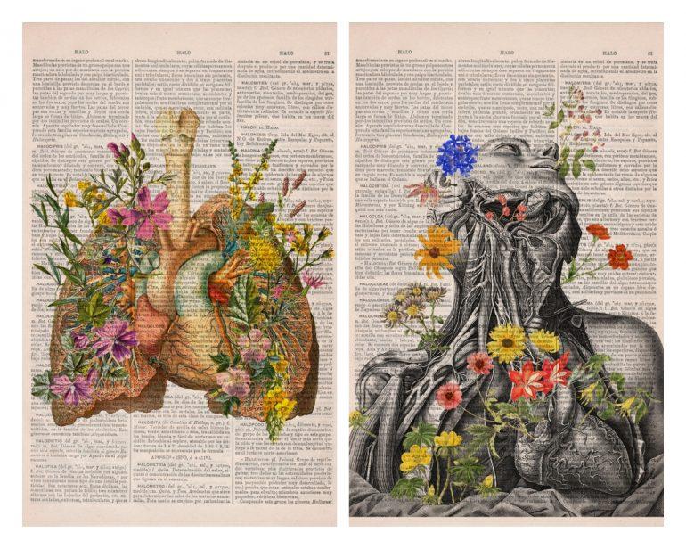 Анатомия и цветы 1