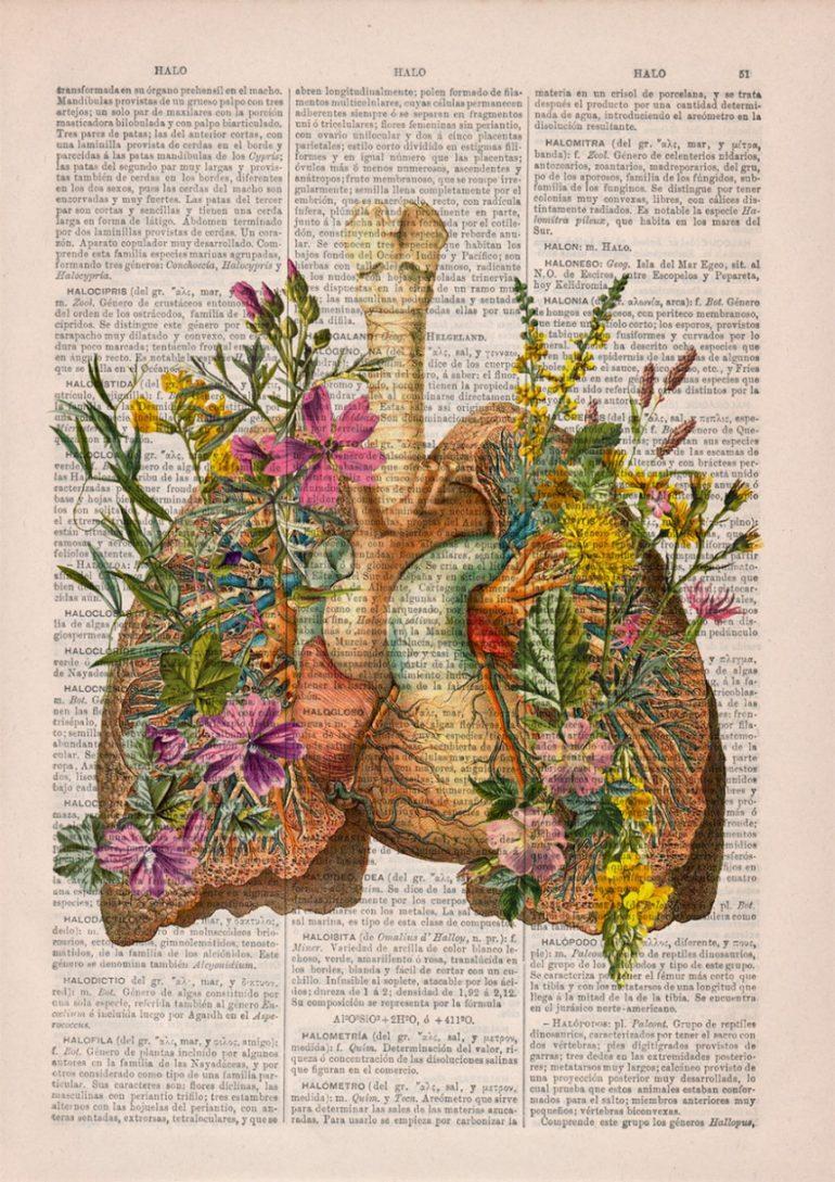 Анатомия и цветы 2