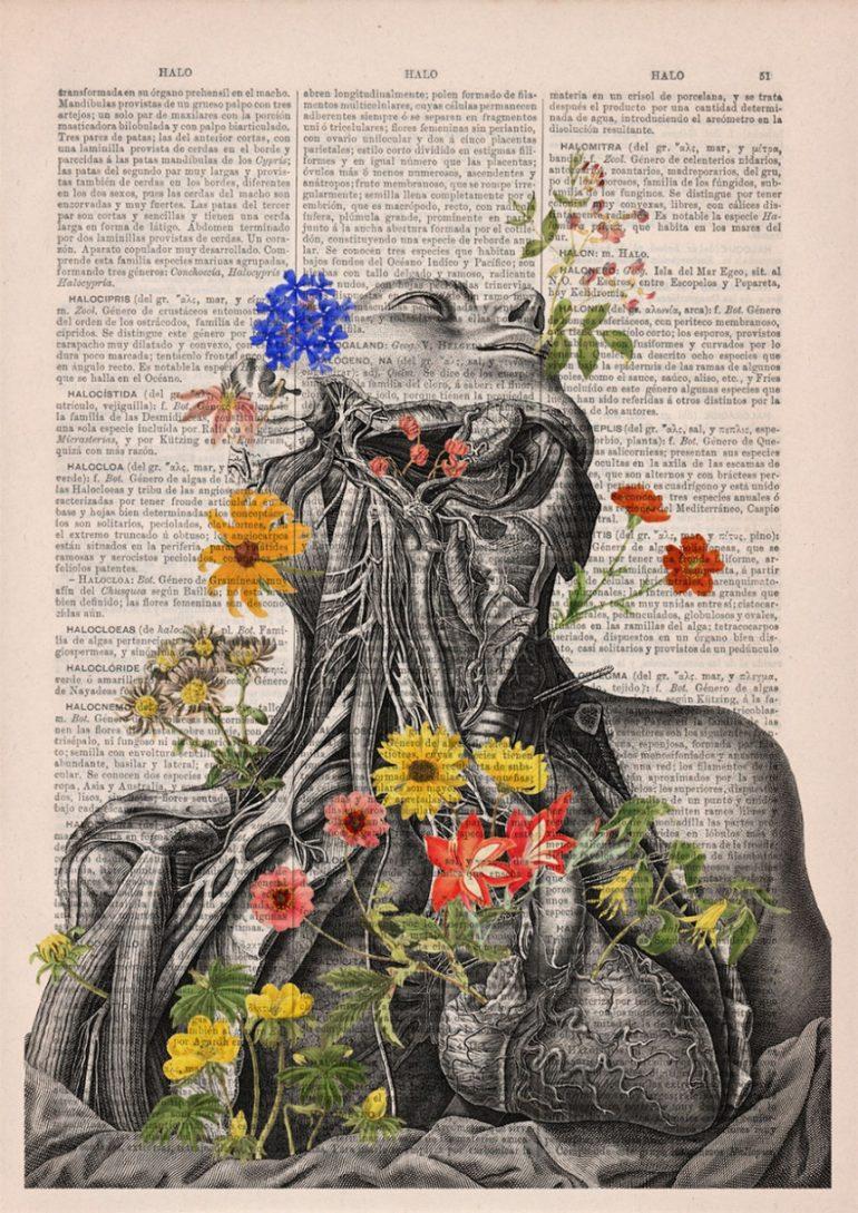 Анатомия и цветы 4