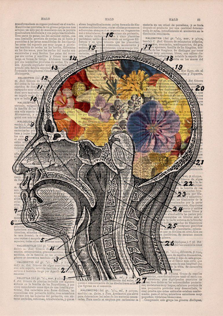 Анатомия и цветы 6