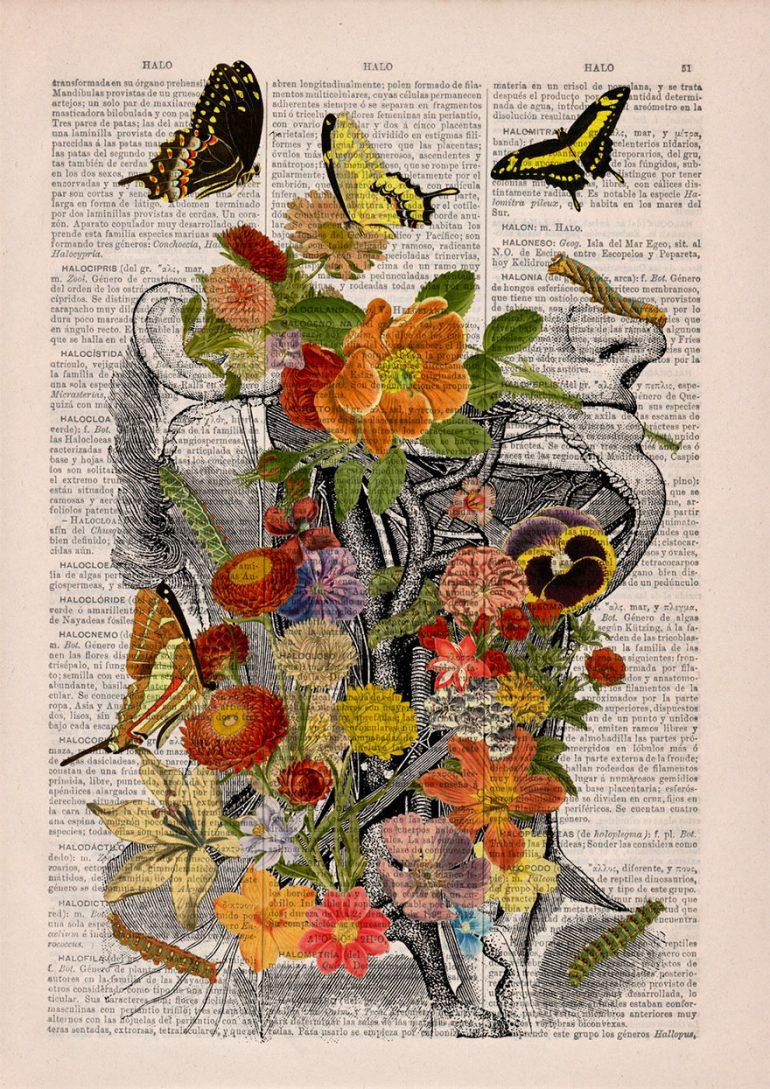 Анатомия и цветы 7